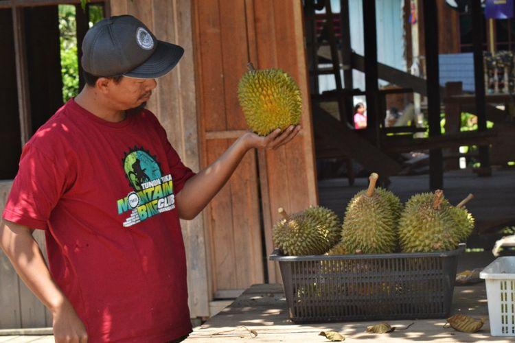Durian hasil petani di wilayah perbatasan Kecamaatan Sebatik mulai dicari warga, meski harga  durian mencapai Rp 25.000 per kilo. Sayangnya, hasil panen durian warga Sebatik merosot tajam tahun ini disebabkan minimnya curah hujan yang membuat buah durian muda rontok.