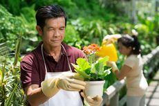 Tak Hanya Usir Bosan, Ini 5 Manfaat Berkebun untuk Kesehatan