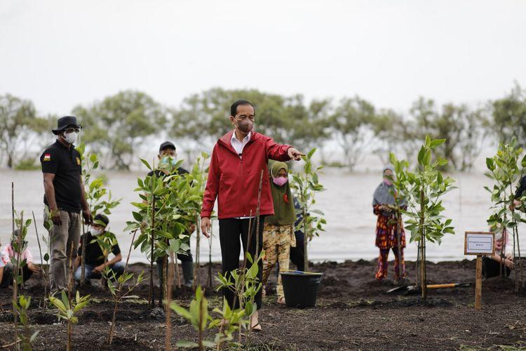 Presiden Jokowi saat melakukan penanaman bibit mangrove bersama warga di kawasan Pantai Raja Kecik Desa Muntai Barat, Kecamatan Bantan, Kabupaten Bengkalis, Riau, Selasa (28/9/2021).
