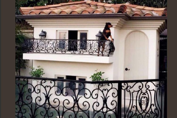 Rumah anjing Paris Hilton
