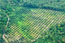 Investor Asing Peringatkan UU Cipta Kerja Ancam Hutan Tropis Indonesia