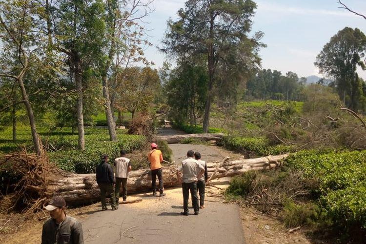 Petugas tengah berupaya memotong pohon besar yang tumbang menutup jalan. Ratusan pohon tumbang akibat angin kencang di Kabupaten Bandung.
