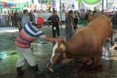 Ada Sapi Kurban dari Jokowi, Gubernur, Wali Kota, Masjid SMB Palembang Bagikan 1.500 Kupon Daging