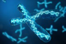 Pola Pewarisan Sifat: Kromosom Pindah Silang