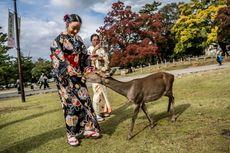 Taman Nara, Destinasi Populer di Jepang untuk Bermain Bersama Rusa