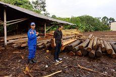 Illegal Logging Masih Marak, Polda Kalbar Sita Ratusan Batang Kayu Rimba