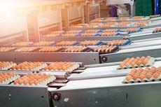 Terlanjur Beli Telur Infertil, Sebaiknya Bagaimana?
