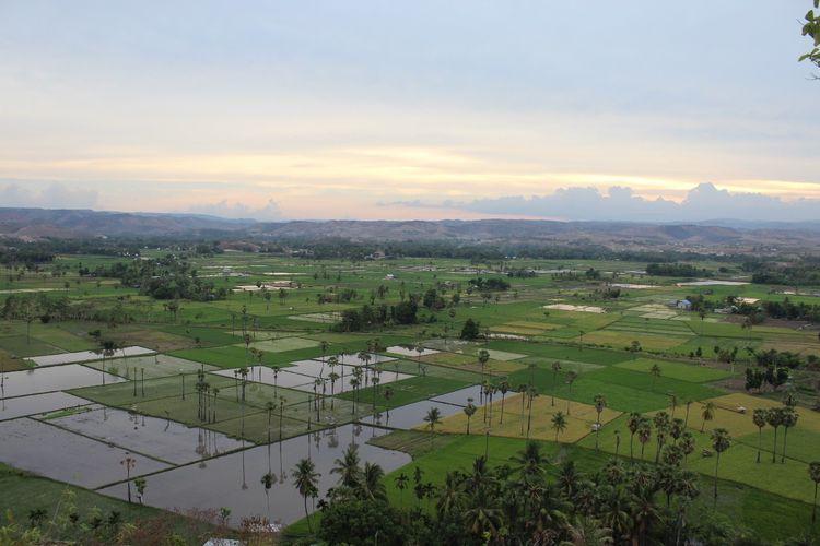 Panorama areal persawahan Mauliru di kaki Bukit Persaudaraan, Kelurahan Mauliru, Kecamatan Kambera, Kabupaten Sumba Timur, Pulau Sumba, Nusa Tenggara Timur (NTT).