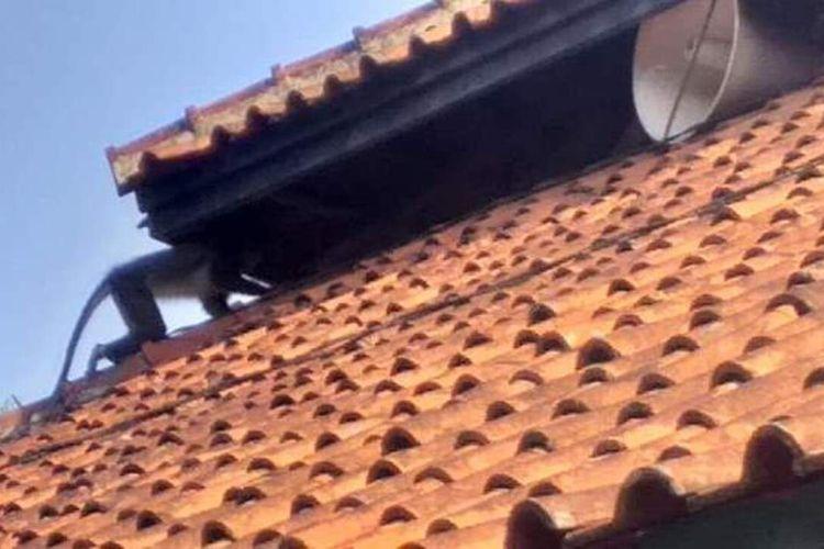 Seekor surili tertangkap kamera di atas kubah masjid di Desa Sukaraharja, Kecamatan Cibeber, Kabupaten Cianjur, Jawa Barat, Sabtu (18/01/2020). Sudah sepekan terakhir warga dikejutkan dengan penampakan kera langka tersebut di permukiman penduduk