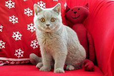Apa Kucing Bisa Kesepian Jika Pemiliknya Hanya Merawat Satu Ekor?