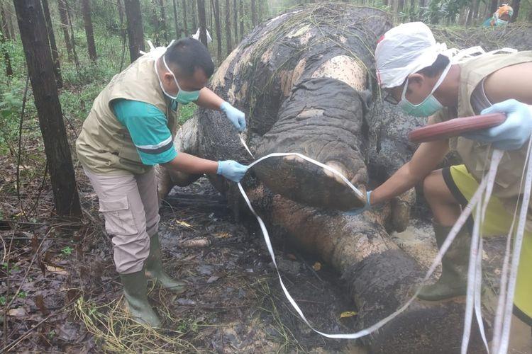 Tim BBKSDA Riau melakukan nekropsi terhadap bangkai gajah yang ditemukan mati di areal PT Arara Abadi di Desa Tasik Serai, Kecamatan Talang Mandau, Kabupaten Bengkalis, Riau, Selasa (19/11/2019).