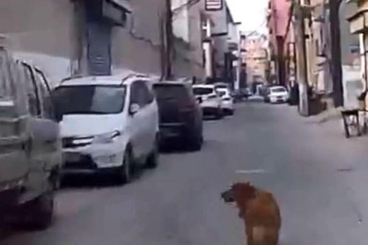 Anjing ini terekam kamera memandu ambulans menuju lokasi di mana pemiliknya pingsan. Peristiwa ini terjadi pada Rabu (16/1/2019) di Yuncheng, Shanxi, China. (Daily Mail)