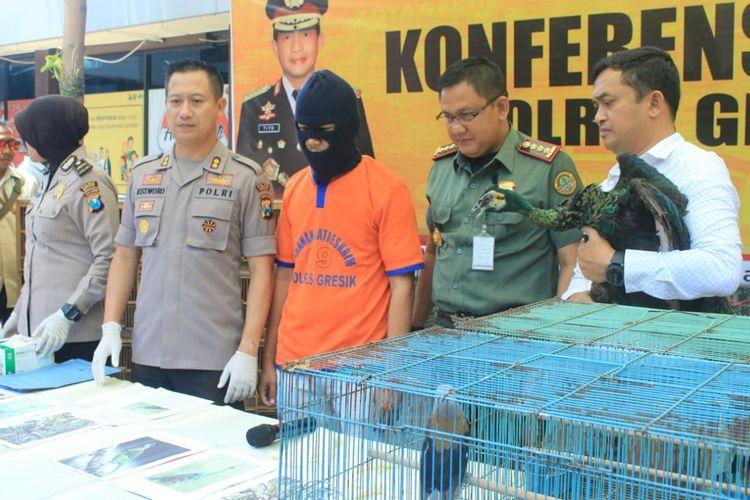 Kapolres Gresik AKBP Kusworo Wibowo (dua dari kiri), bersama salah seorang tersangka penjual burung dilindungi yang berhasil diamankan pihak kepolisian.