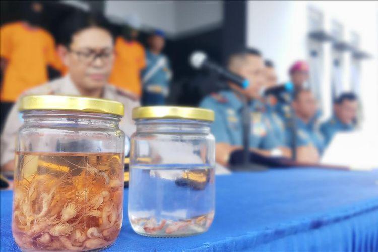 Tim Satgasgab F1QR Koarmada I berhasil menggagalkan aksi penyelundupan baby lobster berbagai jenis yang nilainya mecapai Tp 13,8 miliar dari Batam ke Singapura, Minggu (11/8/2019).