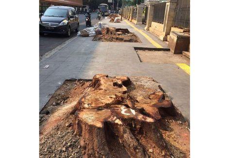 Ketua DPRD Minta Pemprov DKI Hentikan Penebangan Pohon di Trotoar