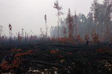Hutan Taman Nasional Sebangau Terbakar, Satwa Endemik Terancam