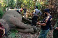 Mengenaskan, Seekor Gajah Sumatera Mati dengan Belalai Terpotong, Ini Penjelasan BKSDA Riau