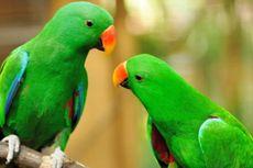 Di Taman Margasatwa Inggris Sekelompok Burung Beo Jago Mengumpat, Terpaksa Dihentikan