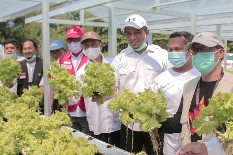 Tim Dompet Dhuafa bersama perwakilan Yayasan CARE Peduli, pendamping, perwakilan pemerintah, dan penerima manfaat melaksanakan panen perdana lahan hidroponik pasca bencana di Palu, Sigi, dan Donggala.