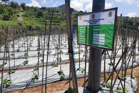 Bangun Ketahanan Pangan Masyarakat, BKP Kementan Bentuk Pertanian Keluarga