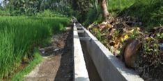 Lewat RJIT, Produktivitas Pertanian di Desa Sading, Bali Meningkat