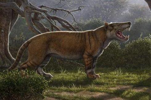 Simbakubwa, Predator Paling Raksasa yang Pernah Hidup di Bumi