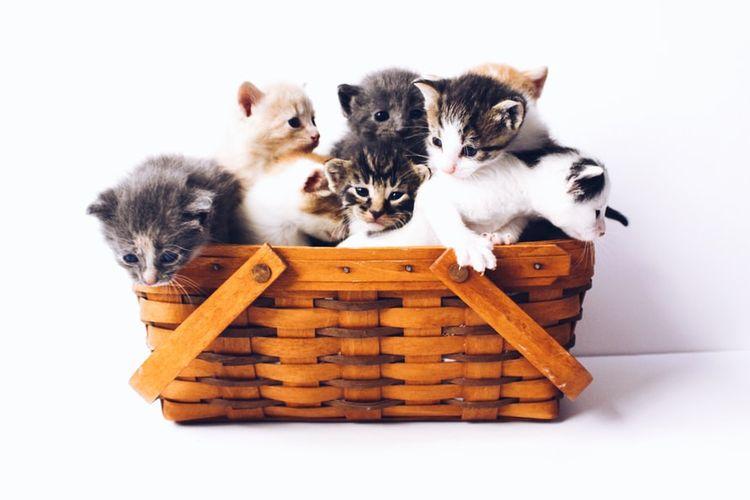 Ilustrasi kucing