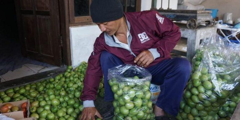 Triswanto, petani tomat di lereng Merapi, Boyolali, Jawa Tengah terpukul dengan harga jual yang anjlok