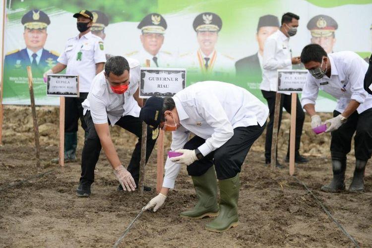 Gubernur Riau Syamsuar menanam jagung dan ubi kayu di lahan milik Pemprov Riau yang dikelola kelompok tani di Desa Rimbo Panjang, Kecamatan Tambang, Kabupaten Kampar, Riau (6/5/2020). Penanaman ini dilakukan untuk antisipasi krisis pangan saat wabah virus corona (Covid-19).