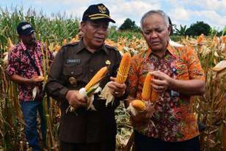 Bupati Lamongan Fadeli (kiri), saat acara panen raya jagung di Lamongan beberapa waktu lalu. (foto; dok.humas Pemkab Lamongan)