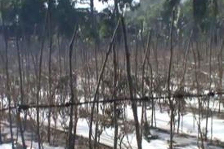 Petani palawija di Pinrang sulawesi selatan terpaksa membeli air Rp 250 ribu pertangki untuk menyiram tanaman mereka yang sedang dilanda kemarau panjang sejka tiga bulan terakhir.