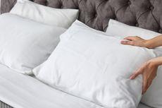 Ingin Tidur Nyenyak? Letakkan Tanaman Herbal Ini di Sarung Bantal