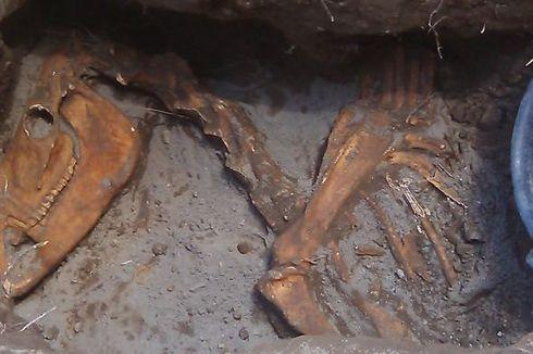 Mengapa Temuan Tulang Hewan di Bantul Diduga Bukan Fosil?