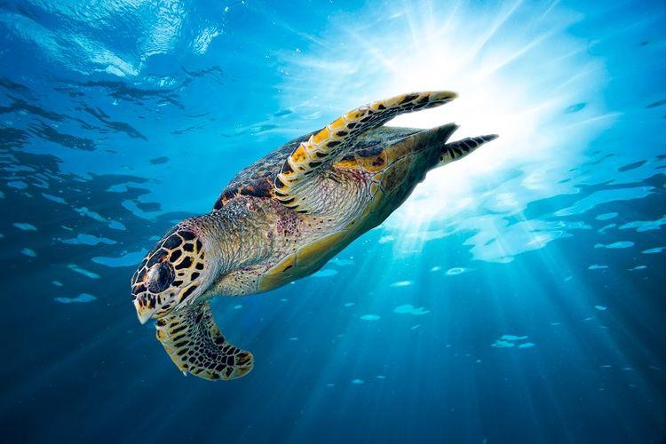 92+ Gambar Hewan Laut Non Hayati HD Terbaik