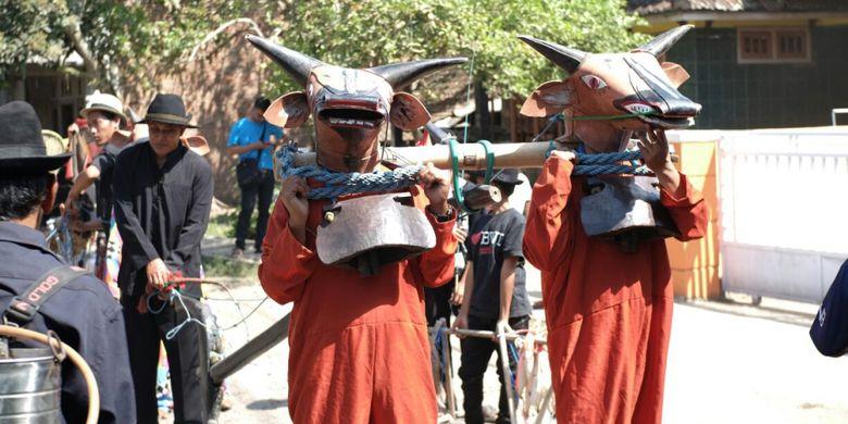 Tradisi Sapi-sapian di Desa Kenjo Banyuwangi.