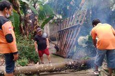 Pohon Tumbang akibat Angin Kencang Rusak Sejumlah Rumah Perbukitan Menoreh