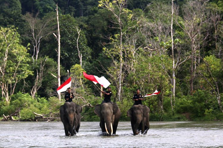 Usai upacara pengibaran bendera merah puti, tiga ekor Gajah Sumatera (Elephas maximus sumatranus)  jinak yang ditunggangi mahot membawa bendera merah putih menyusuluri aliran saungai Sarah Dee kawasan lokasi Conservation Response Unit (CRU) Sampoiniet Aceh Jaya, Jum'at (17/08/18).