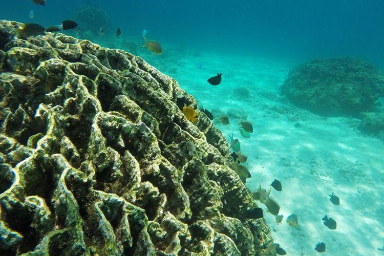 Terumbu karang di Pantai Basring.