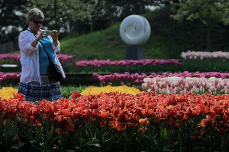Suasana di Taman Bunga Tulip Keukenhof di Lisse, Belanda, Rabu (11/5/2016). Taman seluas 32 hektar ini menyimpan 7 juta jenis bunga dan tahun ini taman ini dibuka pada periode 24 Maret - 16 Mei 2016.