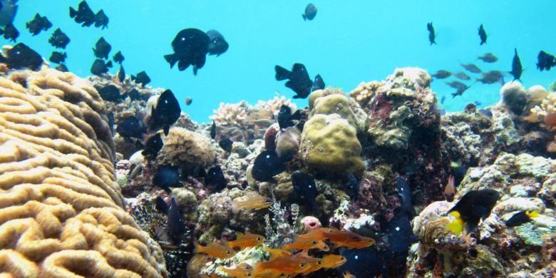 2050 Asia Tenggara Terancam Kekurangan Hasil Laut Halaman All Kompas Com