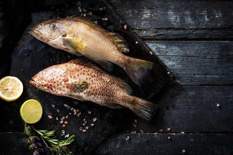 Ilustrasi Ikan Kerapu