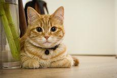 4 Ciri Kucing yang Terinfeksi Rabies dan Cara Mencegahnya