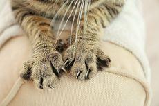 Terungkap, Hasil Autopsi Kucing yang Dicekoki Ciu Positif Mati karena Alkohol