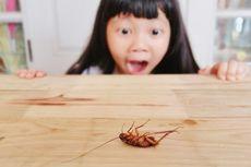 6 Bahaya yang Bisa Ditimbulkan Kecoa terhadap Kesehatan