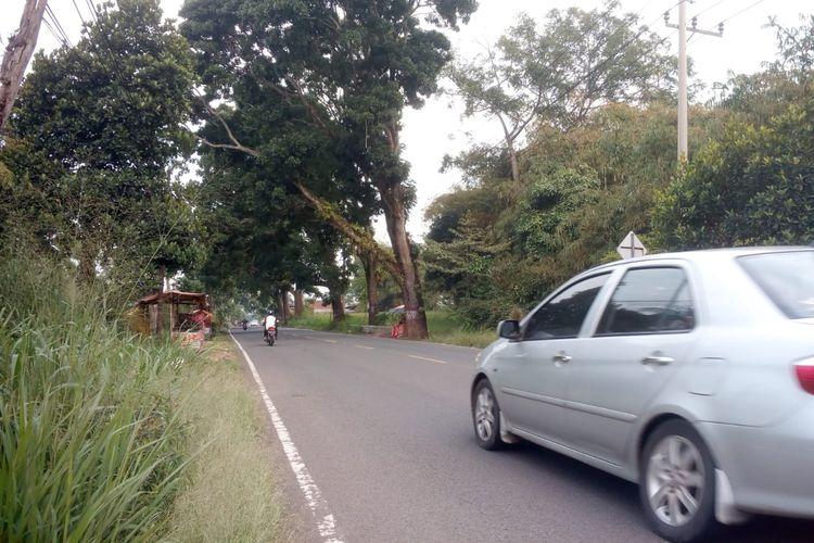 Sejumlah titik di sepanjang jalur Puncak Cianjur, Jawa Barat rawan pohon tumbang pada musim penghujan saat ini. Pengendara pun diminta waspada.