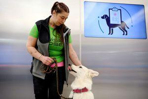 Anjing Pendeteksi Virus Corona di Bandara Finlandia, Bagaimana Cara Kerjanya?