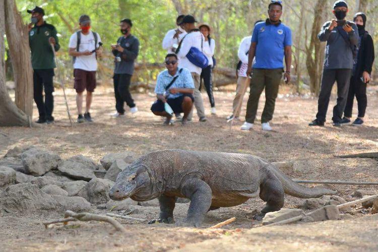 Kementerian Pariwisata dan Ekonomi Kreatif bersama dengan BOPLBF melaksanakan famtrip dengan media di kawasan Taman Nasional Komodo, Labuan Bajo, Manggarai Barat, NTT, Minggu, (13/9/2020). (HANDOUT/BOPLBF)