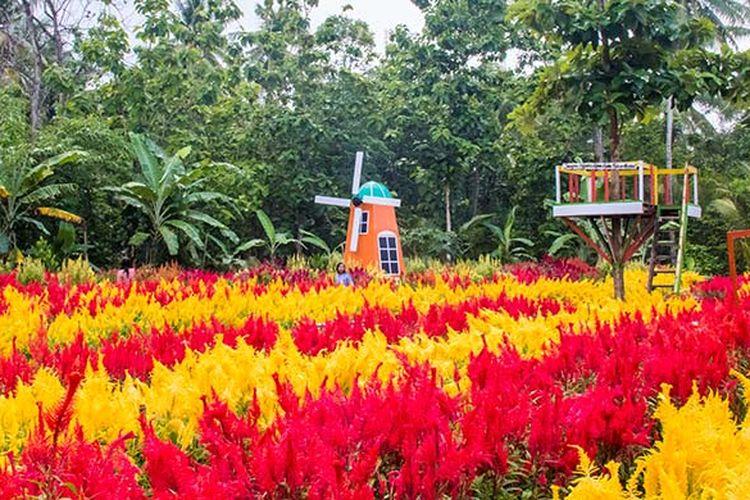 Taman Bunga Kebon Asri di Bayat, Klaten yang bernuansa Negeri Belanda.