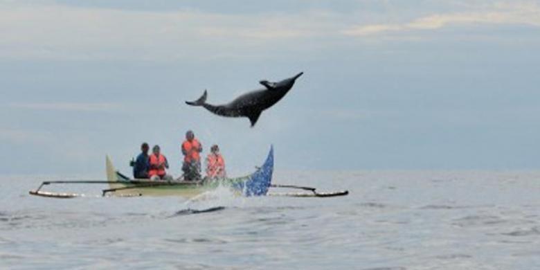 Lumba-lumba di Teluk Kiluan, Lampung.