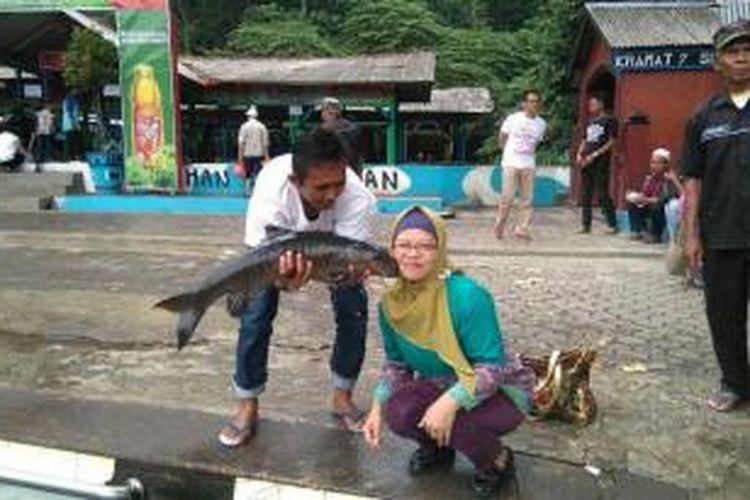 Salah satu atraksi di Cibulan adalah merasakan sensasi dicium ikan dewa yang diyakini sebagai titisan Raja Pajajaran, Prabu Siliwangi.